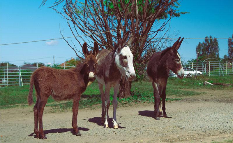 Újszülöttek hazánk első Safari Parkjában!